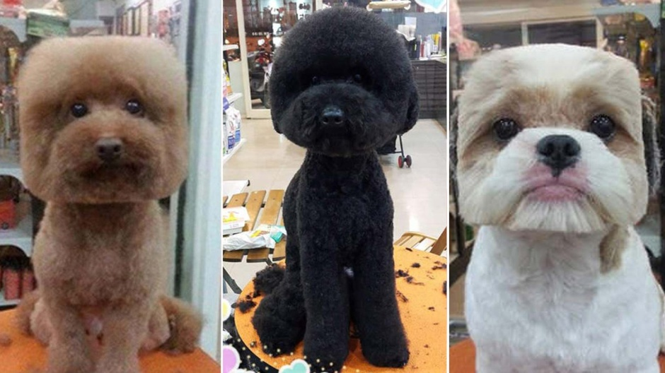 1-pups